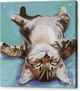 Little Napper  Acrylic Print