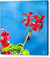 Little Paradise Acrylic Print