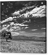 Little Prarie Big Sky - Black And White Acrylic Print