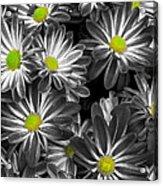 Little Rays Of Sunshine Acrylic Print