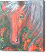 Little Red Horse Acrylic Print