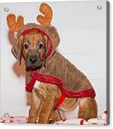 Little Reindeer Acrylic Print