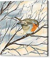 Little Robin Acrylic Print