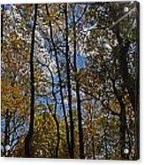 Little Round Top Trees Acrylic Print