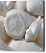 Little Sand Dollar And Seashells Acrylic Print