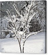 Little Snow Tree Acrylic Print by Karen Adams