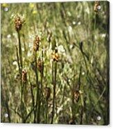 Little Weeds Acrylic Print
