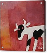 Little White Cow Acrylic Print