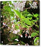 Little White Flowers Acrylic Print by Cathie Tyler