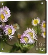 Little Wild Flowers Acrylic Print