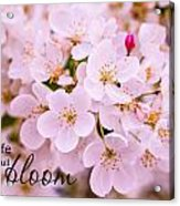 Live Life In Bloom Acrylic Print