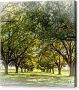 Live Oak Journey Vignette Acrylic Print