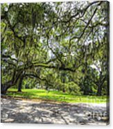 Live Oaks Dripping With Spanish Moss Acrylic Print