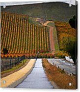 Livermore Vineyard 2 Acrylic Print