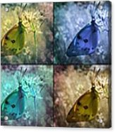 Lives Of A Butterfly Acrylic Print