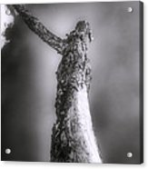 Living Dead Tree - Spooky - Eerie Acrylic Print