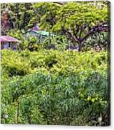 Living Off The Grid In The Waipi'o Valley Acrylic Print