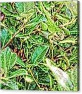 Lizard 7 Acrylic Print