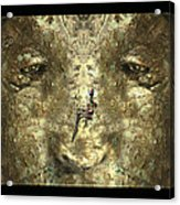 Lizard Head Acrylic Print