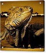 Lizard Sunbathing In Miami II Acrylic Print