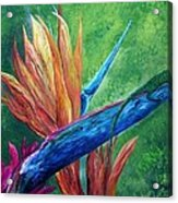 Lizard On Bird Of Paradise Acrylic Print