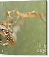 Lizard On The Branch Acrylic Print