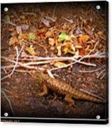 Lizard On The Loose Acrylic Print