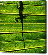 Lizard On The Other Side Acrylic Print