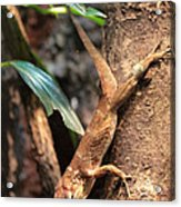 Lizard On The Tree Acrylic Print