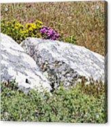 Lizard Protected Granite Boulders Acrylic Print