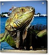 Lizard Sunbathing In Miami Acrylic Print