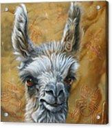 Llama Baby Acrylic Print by Jurek Zamoyski