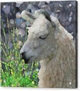 Llama Acrylic Print by Jack Zulli