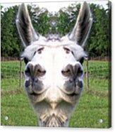 Llama  Fun Head Games Acrylic Print