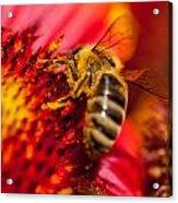 Loads Of Bee Pollen Acrylic Print