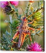 Locust And Thistle 2am-110423 Acrylic Print