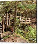 Log Bridge In The Rainforest Acrylic Print