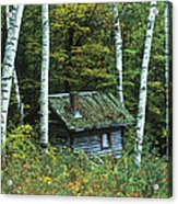 Log Cabin In The Birch Forest Vermont Acrylic Print