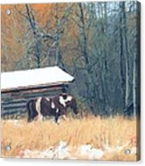 Log Cabin Pony Acrylic Print