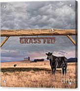 Log Entrance To Grass Fed Angus Beef Ranch Acrylic Print by Susan McKenzie