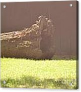 Log In Hazy Sunlight Acrylic Print