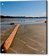 Logger Left Overs Acrylic Print