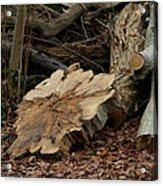 Logs Acrylic Print