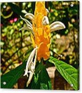 Lollipop Flower In Quepos-costa Rica Acrylic Print