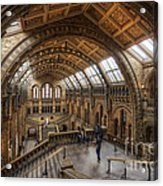 London Natural History Museum Acrylic Print