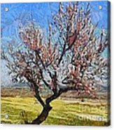 Lone Almond Tree In Bloom Acrylic Print
