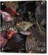 Lone Berry Acrylic Print