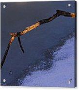 Lone Branch 2 Acrylic Print
