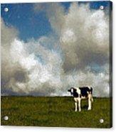 Lone Cow Acrylic Print
