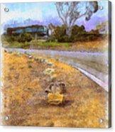 Lone Cypress From Palos Verdes Acrylic Print